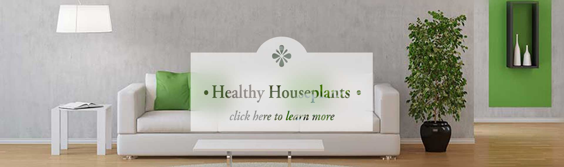 HousePlants_FROSTED