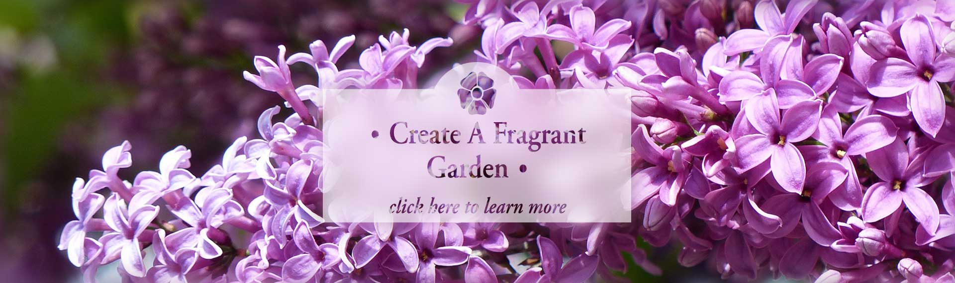 1Fragrant_FROSTED