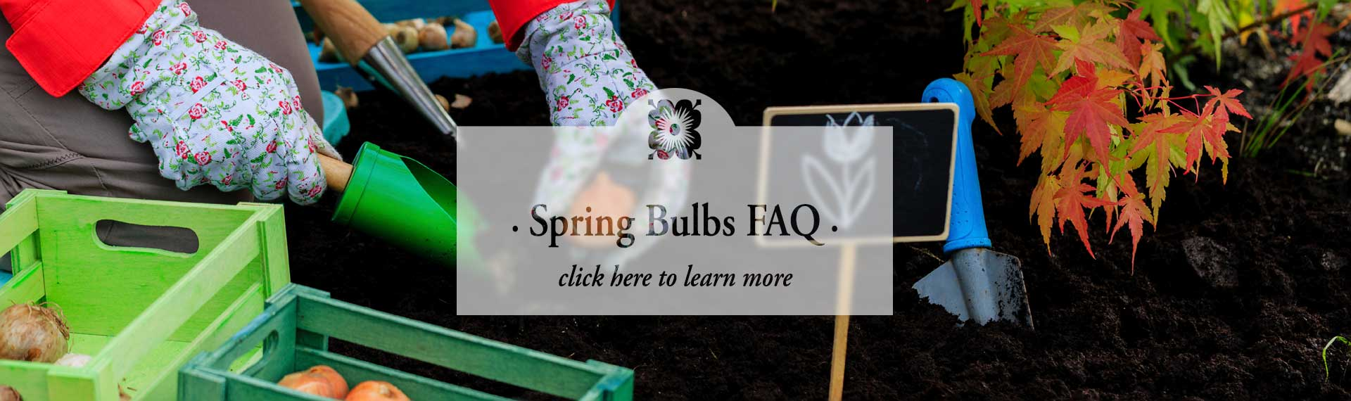 bulbs_FROSTED