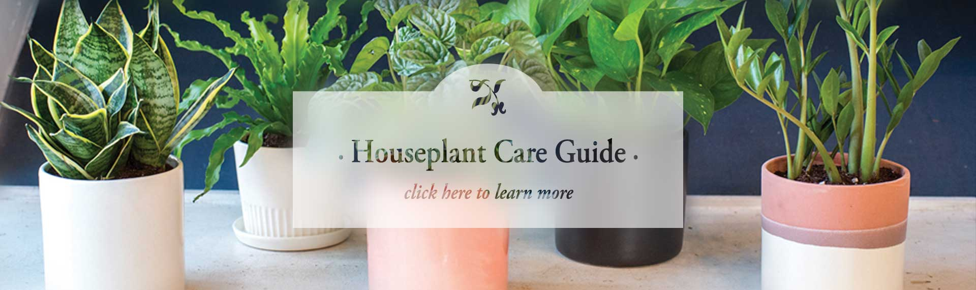 houseplant_FROSTED