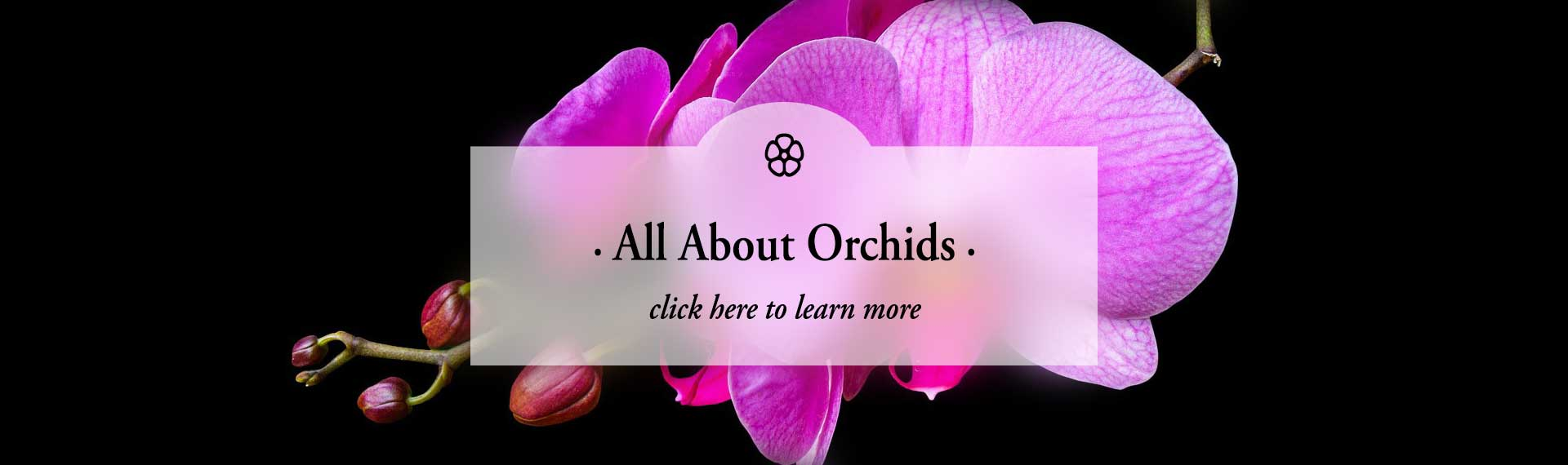 orchids_FROSTED